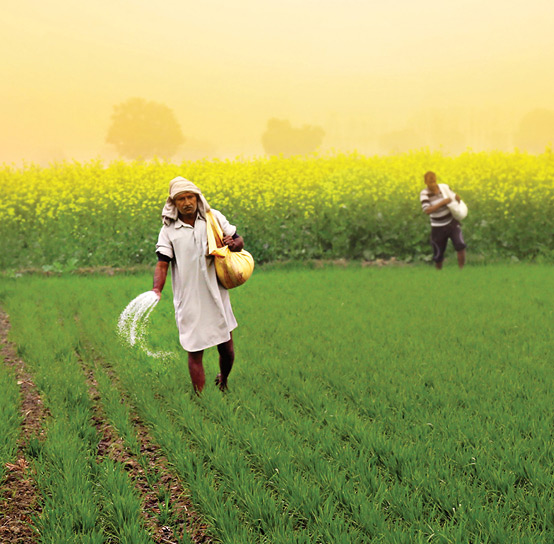 Decoding agriculture in India amid COVID-19 crisis